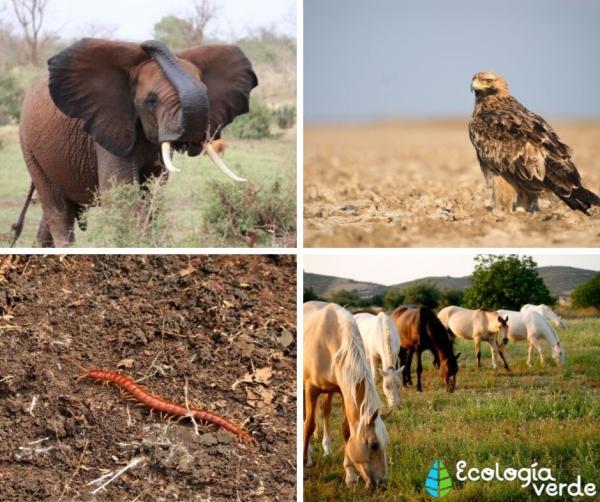 Qué es el hábitat terrestre: definición, tipos y animales - Animales de hábitat terrestre