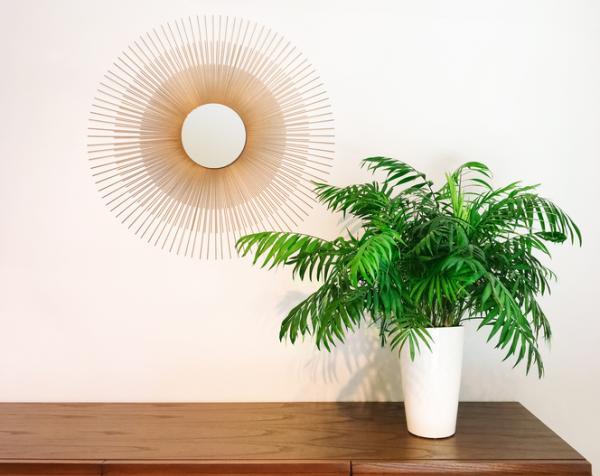 +25 plantas de interior que necesitan poca luz