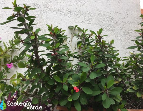 15 plantas de interior que necesitan poca luz - Plantas de interior que no necesitan luz ...