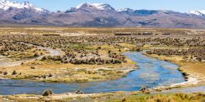 Puna: qué es, características, flora y fauna