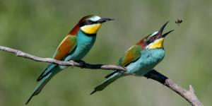 Animales insectívoros: qué son y lista de ejemplos