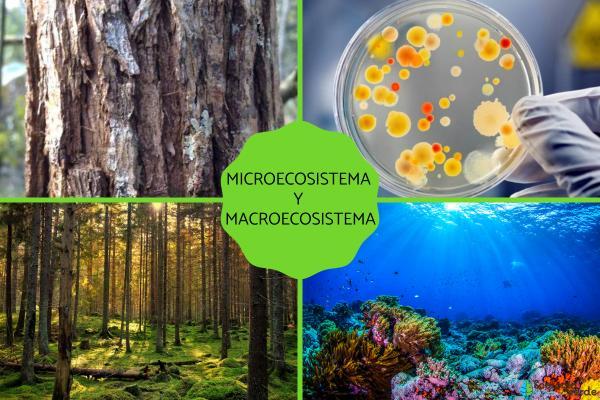 Microecosistema y macroecosistema: qué son y ejemplos