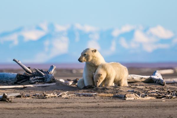 Extinción de especies: qué es, causas y consecuencias - Causas de la extinción de especies