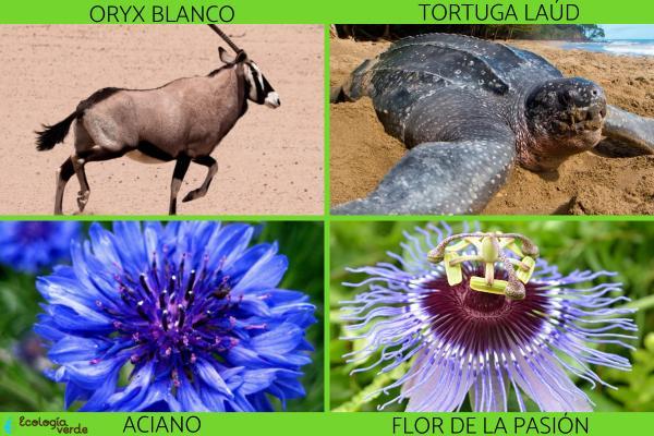 Extinción de especies: qué es, causas y consecuencias - Ejemplos de especies en peligro de extinción
