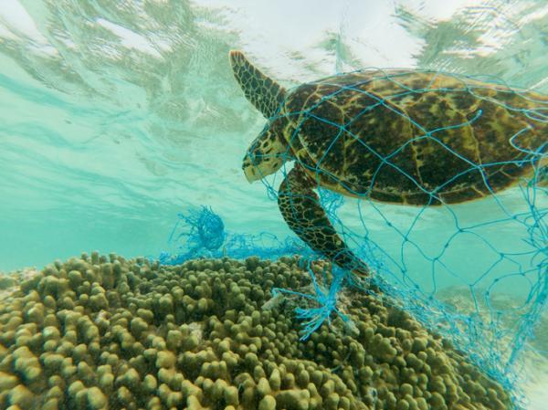 Tortugas del Mediterráneo - Amenazas de las tortugas del Mediterráneo