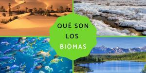 Qué son los biomas: tipos y ejemplos