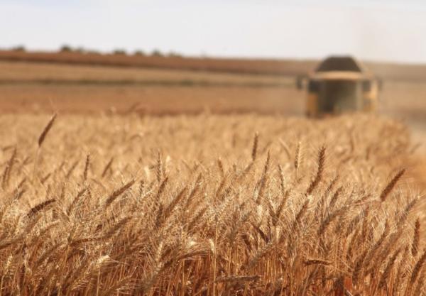 Recursos naturales del Paraguay - Agricultura