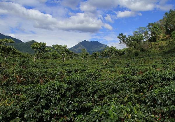 Biomas de Guatemala - Selva de montaña