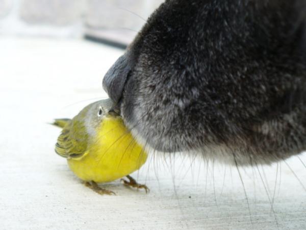 Cómo se comunican los animales