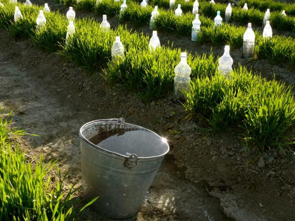 Por qué es importante cuidar el agua - Cómo cuidar el agua: ahorro y cuidado de su calidad