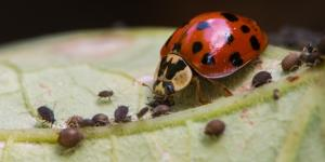 Control biológico de plagas: qué es, ventajas, desventajas y ejemplos