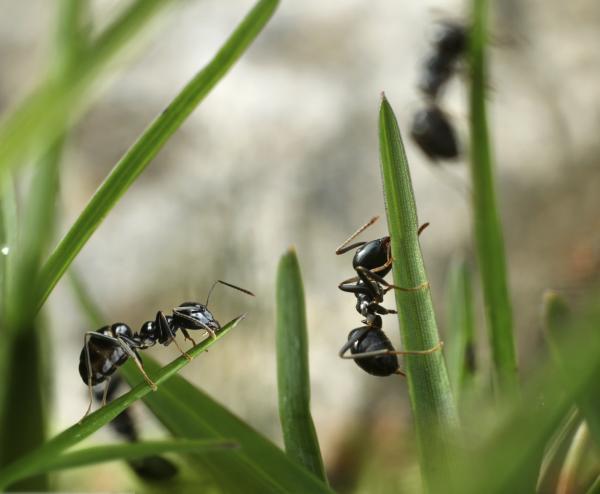 Qué son los insectos y sus características