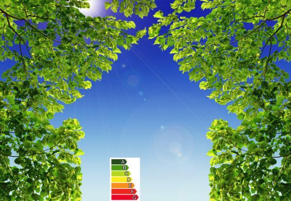 Biocapacidad: qué es y ejemplos - Biocapacidad: ejemplos