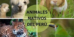 +45 animales nativos del Perú