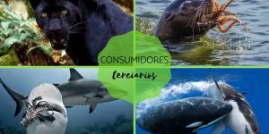 Consumidores terciarios: qué son y ejemplos