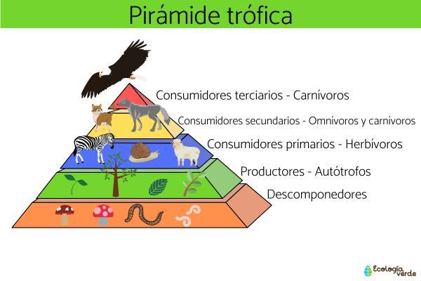 Consumidores terciarios: qué son y ejemplos - Otros organismos consumidores
