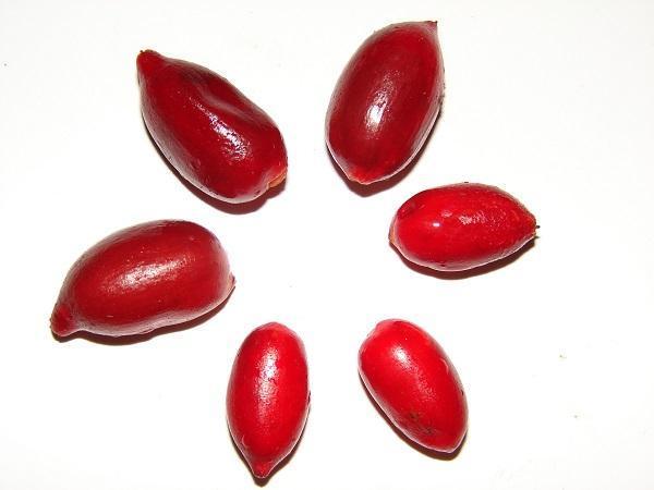 30 nombres de frutas tropicales raras - Fruta milagrosa