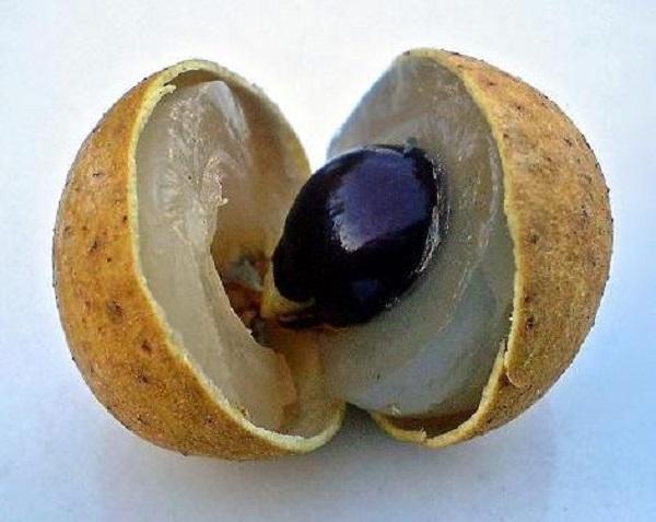 30 nombres de frutas tropicales raras - Longan