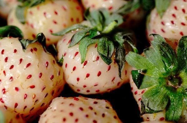 30 nombres de frutas tropicales raras - Pineberry