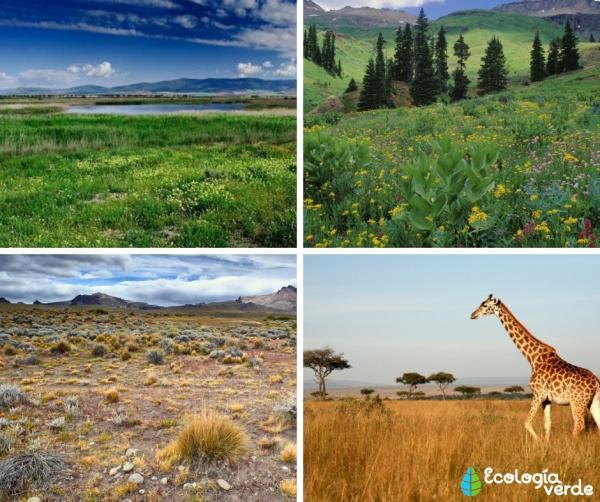 Tipos de ecosistemas terrestres y ejemplos - Herbazales, otro de los tipos de ecosistemas terrestres importantes