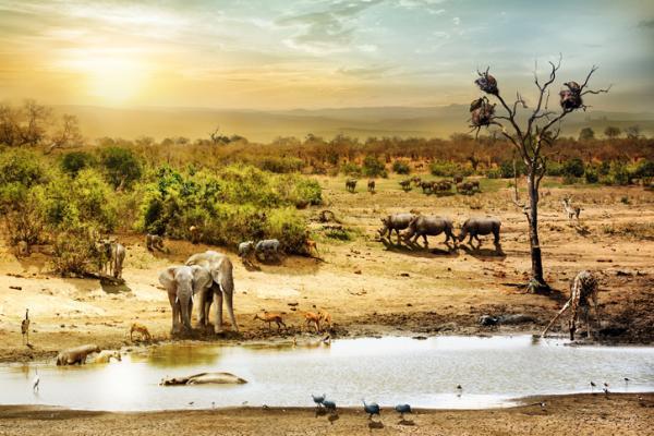 Tipos de ecosistemas terrestres y ejemplos - Lista de los tipos de ecosistemas terrestres