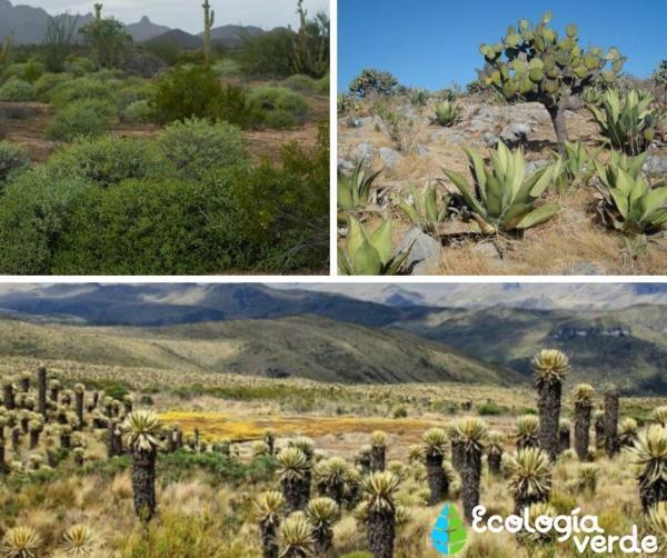 Tipos de ecosistemas terrestres y ejemplos - Matorrales