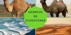 Tipos de ecosistemas terrestres y ejemplos