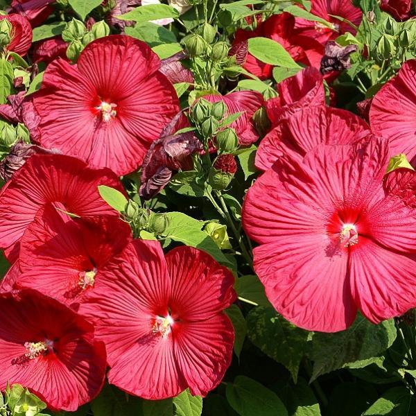 16 Plantas De Jardín Con Flores Resistentes Al Sol Lista Fotos Y VÍdeo