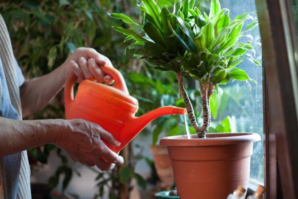 Vinagre para las plantas: beneficios y cómo utilizarlo - Beneficios del vinagre para las plantas
