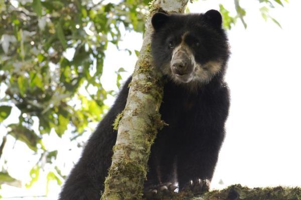Páramo: características, flora y fauna - Fauna del páramo