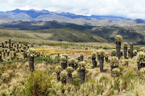 Páramo: características, flora y fauna