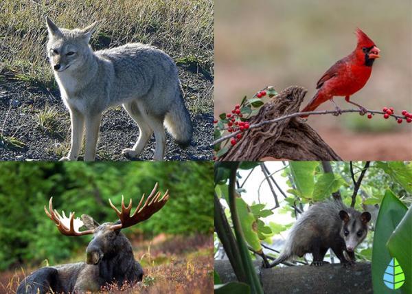 Cuál es la importancia de la conservación de la flora y la fauna - Qué es la biodiversidad