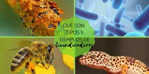 Bioindicadores: qué son, tipos y ejemplos