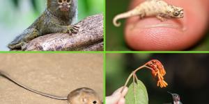 Los animales más pequeños del mundo