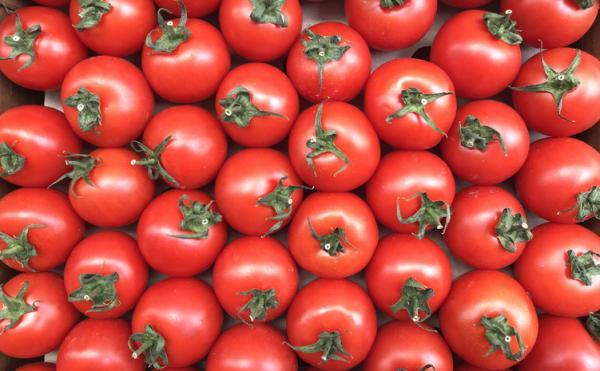 +30 tipos de tomates - Tipos de tomates con pocas semillas: el tomate marglobe