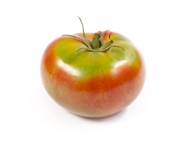 +30 tipos de tomates - Tomate esquena verd