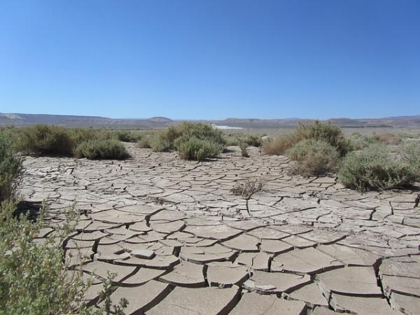 Flora y fauna del desierto de Atacama - Flora del desierto de Atacama