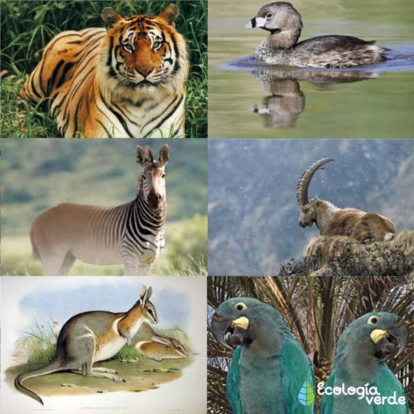 Lista de animales extintos por el hombre - Lista de animales extintos por el hombre