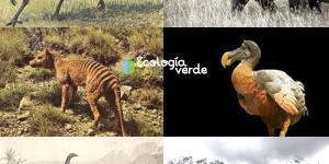 Lista de animales extintos por el hombre