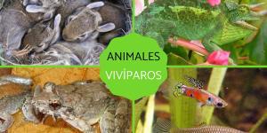 Animales vivíparos: qué son, características y ejemplos