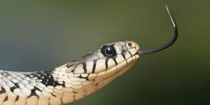 Características de los reptiles para niños