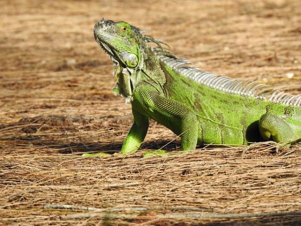 Características de los reptiles para niños - Qué características tienen los reptiles