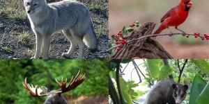 Qué animales viven en el bosque templado