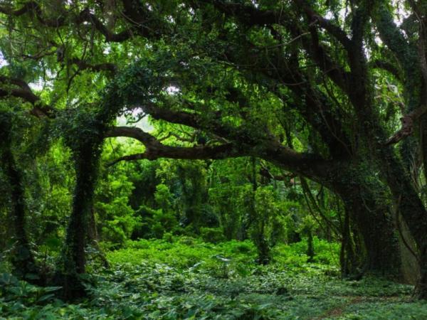 Qué animales viven en el bosque templado - Qué es el bosque templado
