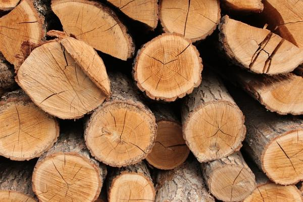 Qué son los árboles - Qué se obtiene de un árbol