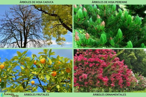 Qué son los árboles - Tipos de árboles