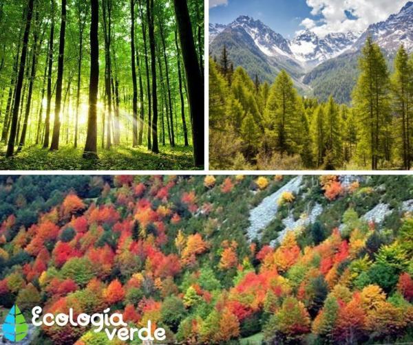 Qué animales viven en el bosque templado - Tipos de bosques templados