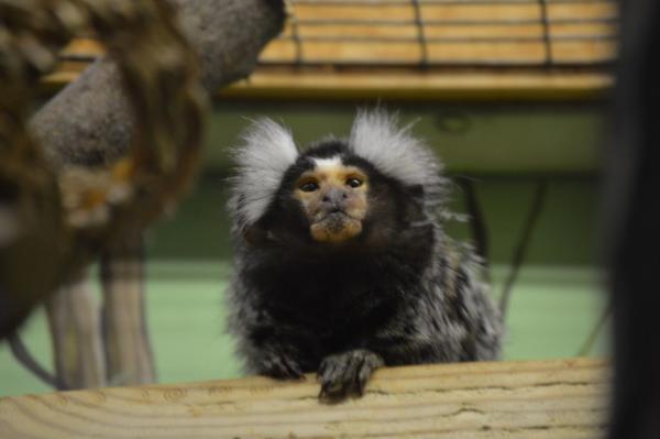 Animales de la ciudad - Monos