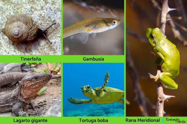 Flora y fauna de Canarias - Fauna de Canarias