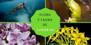 Flora y fauna de Canarias